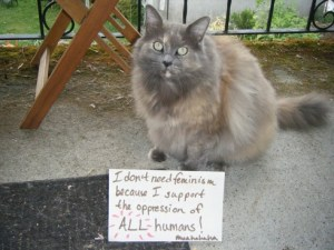 Lampoon anti-feminism CBC cat pic support oppression all humans